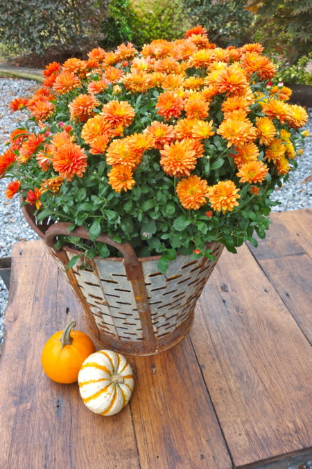 Vintage Olive Bucket for Fall