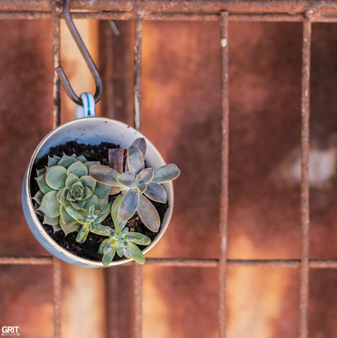 Hanging Tea Cup With Succulents