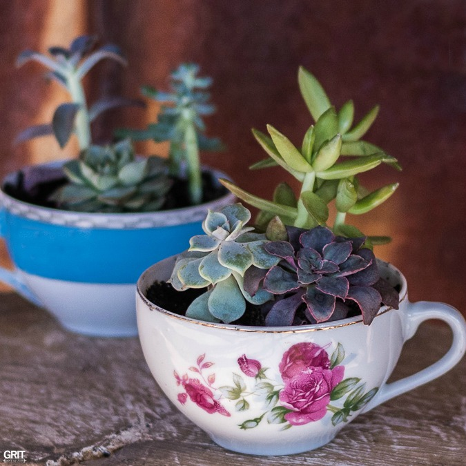 Vintage Tea Cups and Succulents