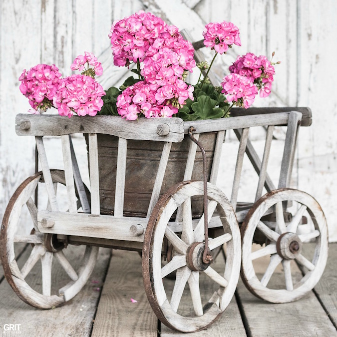 Flea Market Finds. Goat Wagon is perfect for spring flowers